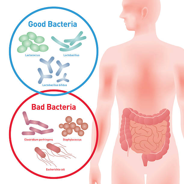 good bacteria and bad bacteria - darmflora stock-grafiken, -clipart, -cartoons und -symbole