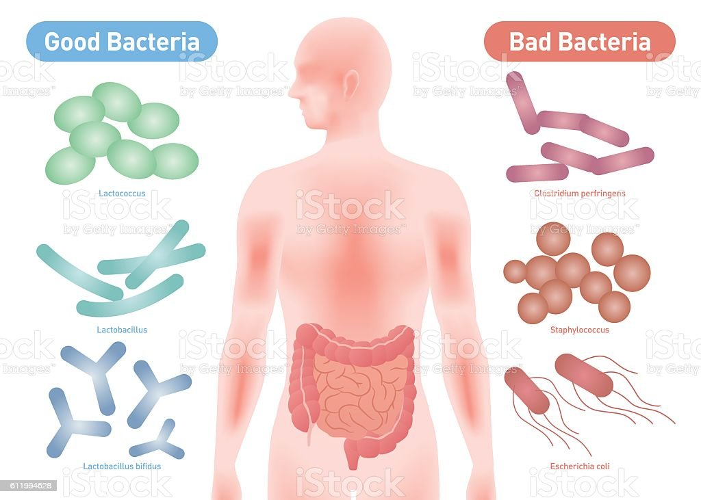 Good Bacteria and Bad Bacteria vector art illustration