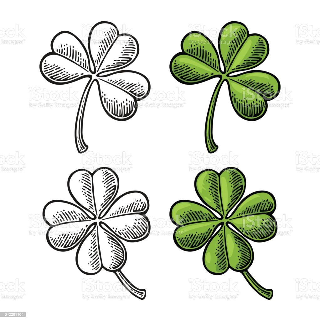 Good luck four and three leaf clover. Vintage color engraving