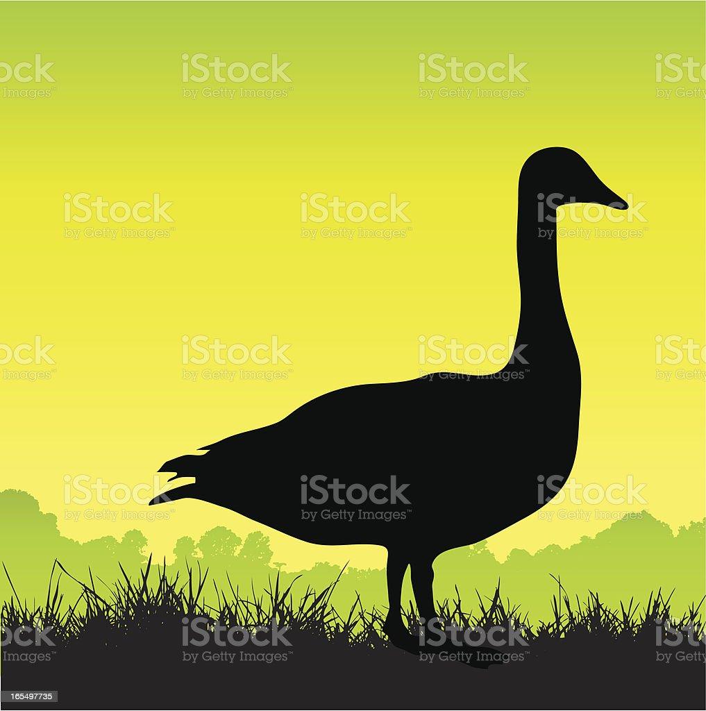 Goose silhouette debout sur de l'herbe - Illustration vectorielle