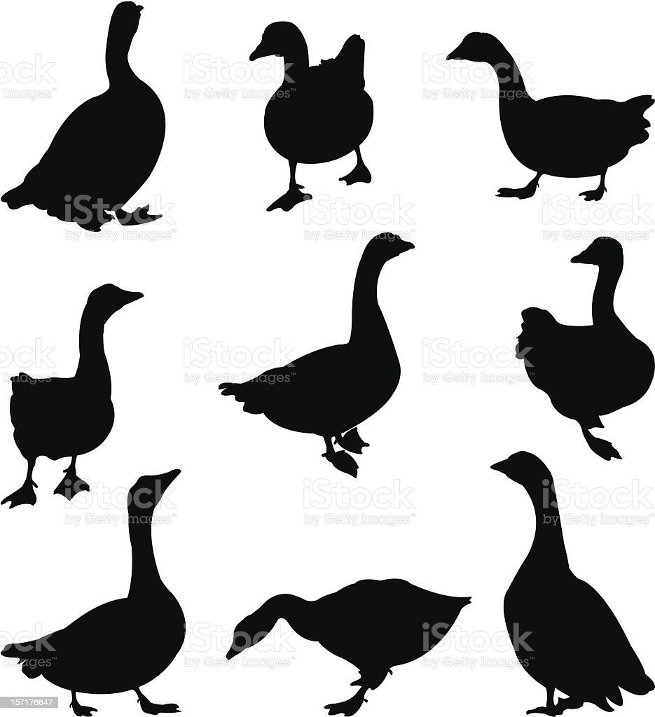 gooses vector art illustration