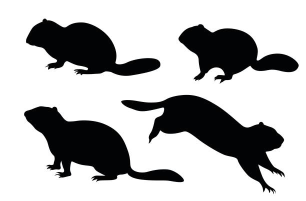 cute groundhog silhouette clip art vector images illustrations