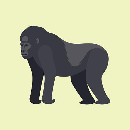 Gorila monkey rare animal vector cartoon macaque nature primate character wild zoo ape chimpanzee