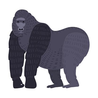 Gorila monkey rare animal vector.