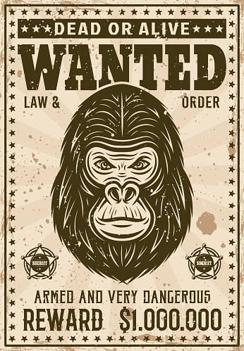 Gorilla head wanted poster in vintage style vector illustration. Layered, separate grunge texture and text