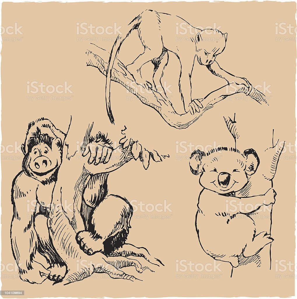 Gorilla, Monkey and Koala royalty-free stock vector art
