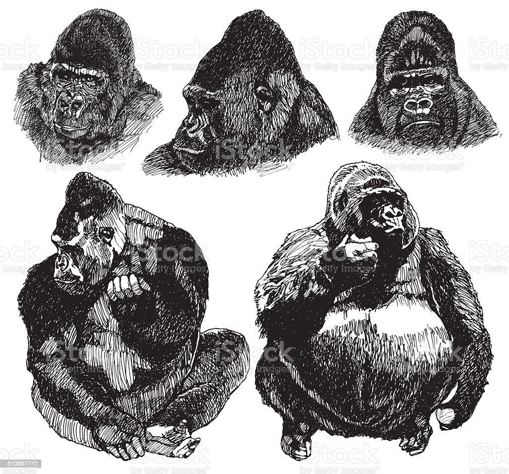 Gorilla sketch. drawing Illustration vector art illustration