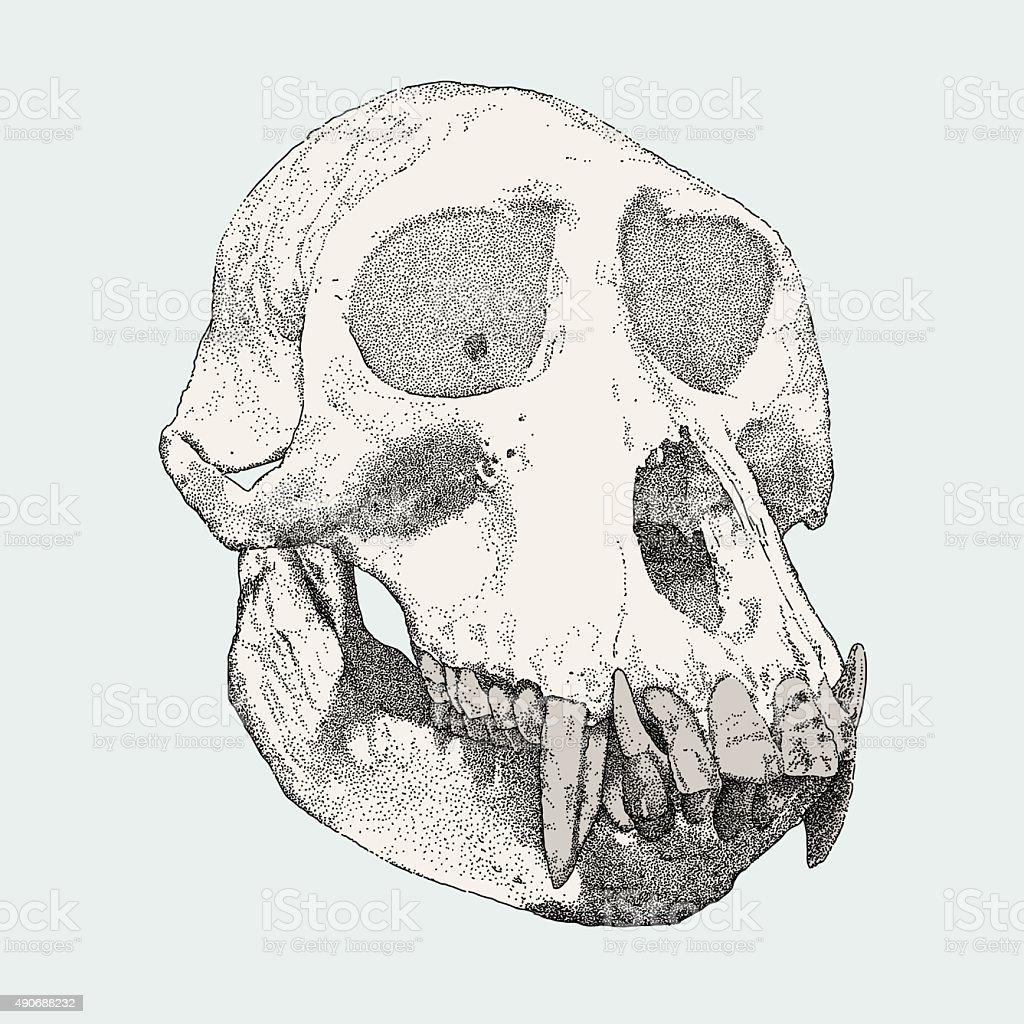 Gorilla Skull vector art illustration