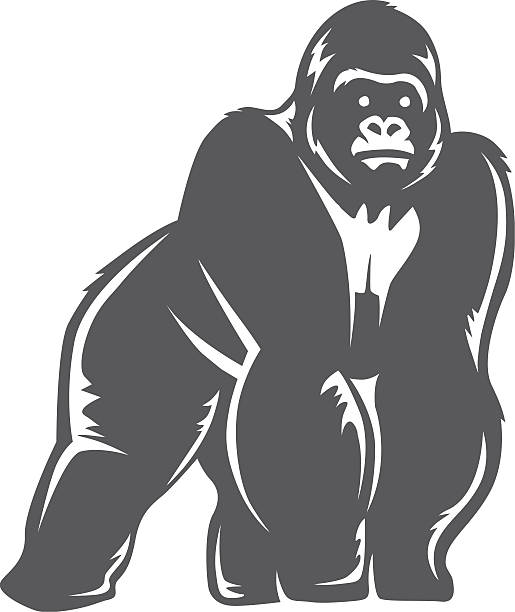 ilustraciones, imágenes clip art, dibujos animados e iconos de stock de gorila de pie gris - gorila
