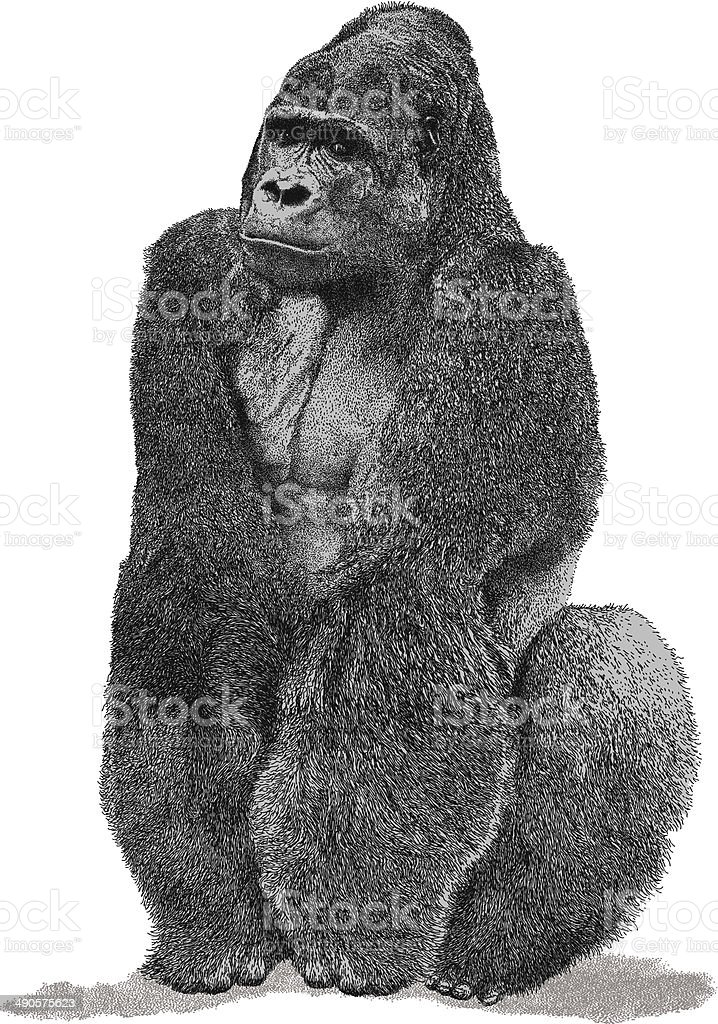 Gorilla vector art illustration
