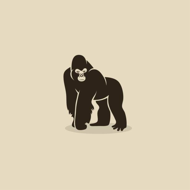ilustraciones, imágenes clip art, dibujos animados e iconos de stock de gorilla-ilustración vectorial - gorila