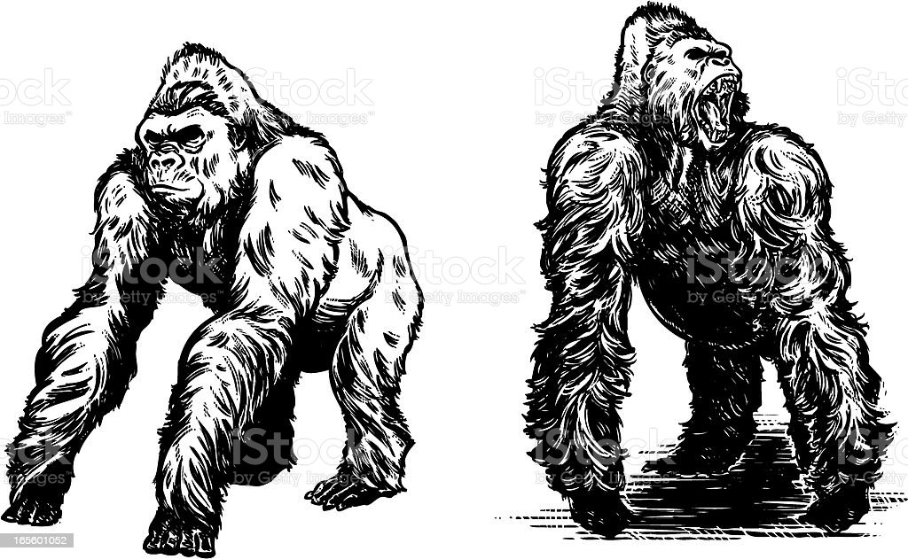 Gorillas in BLACK vector art illustration