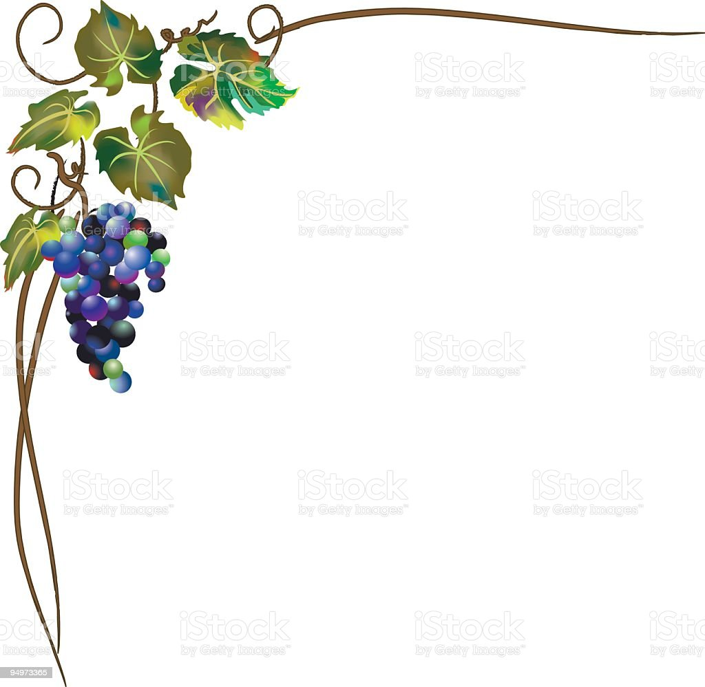 Gm Credit Card >> Gradient Mesh Grapevine Stylized Corner Element Isolated On White Stock Vector Art & More Images ...