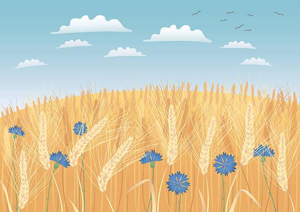 ilustraciones, imágenes clip art, dibujos animados e iconos de stock de campos de grano - straw field