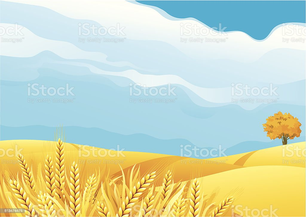 Grain fields vector art illustration