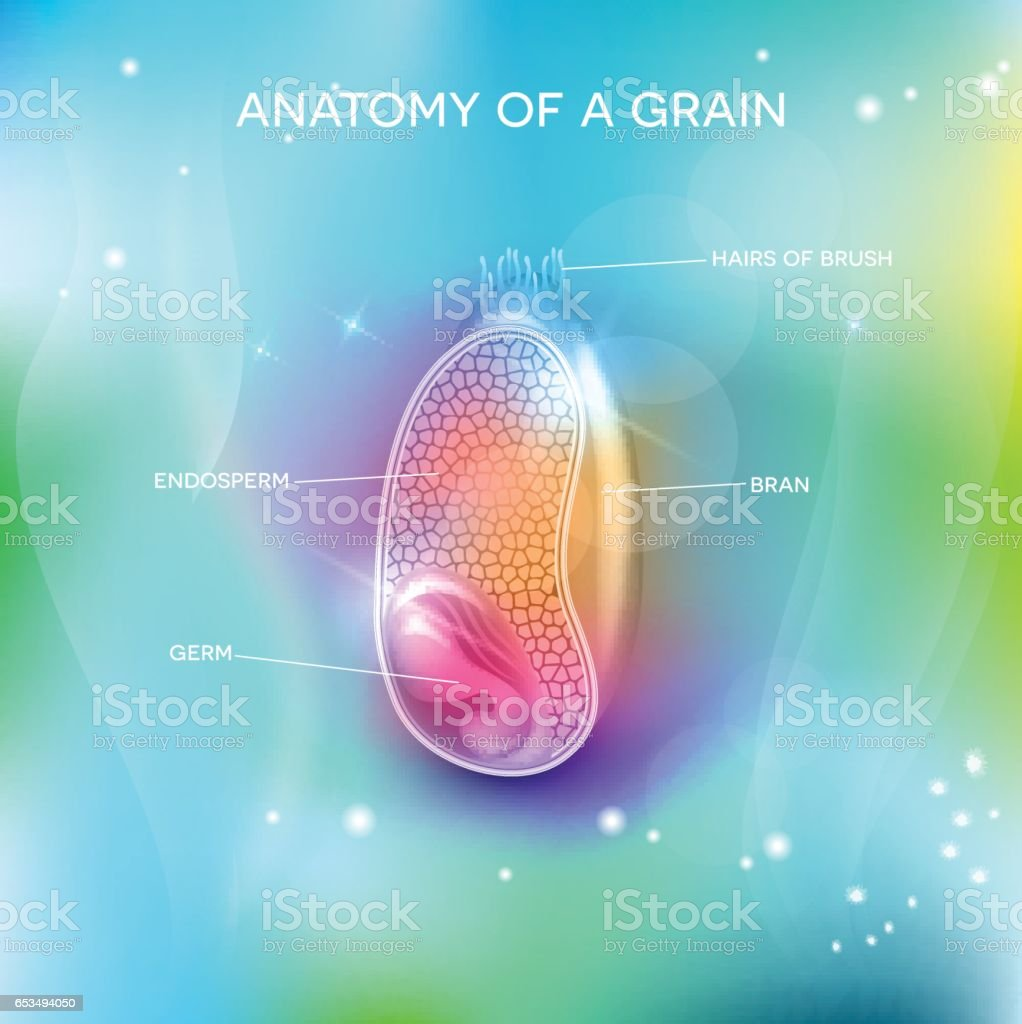 Grain structure on a beautiful background vector art illustration