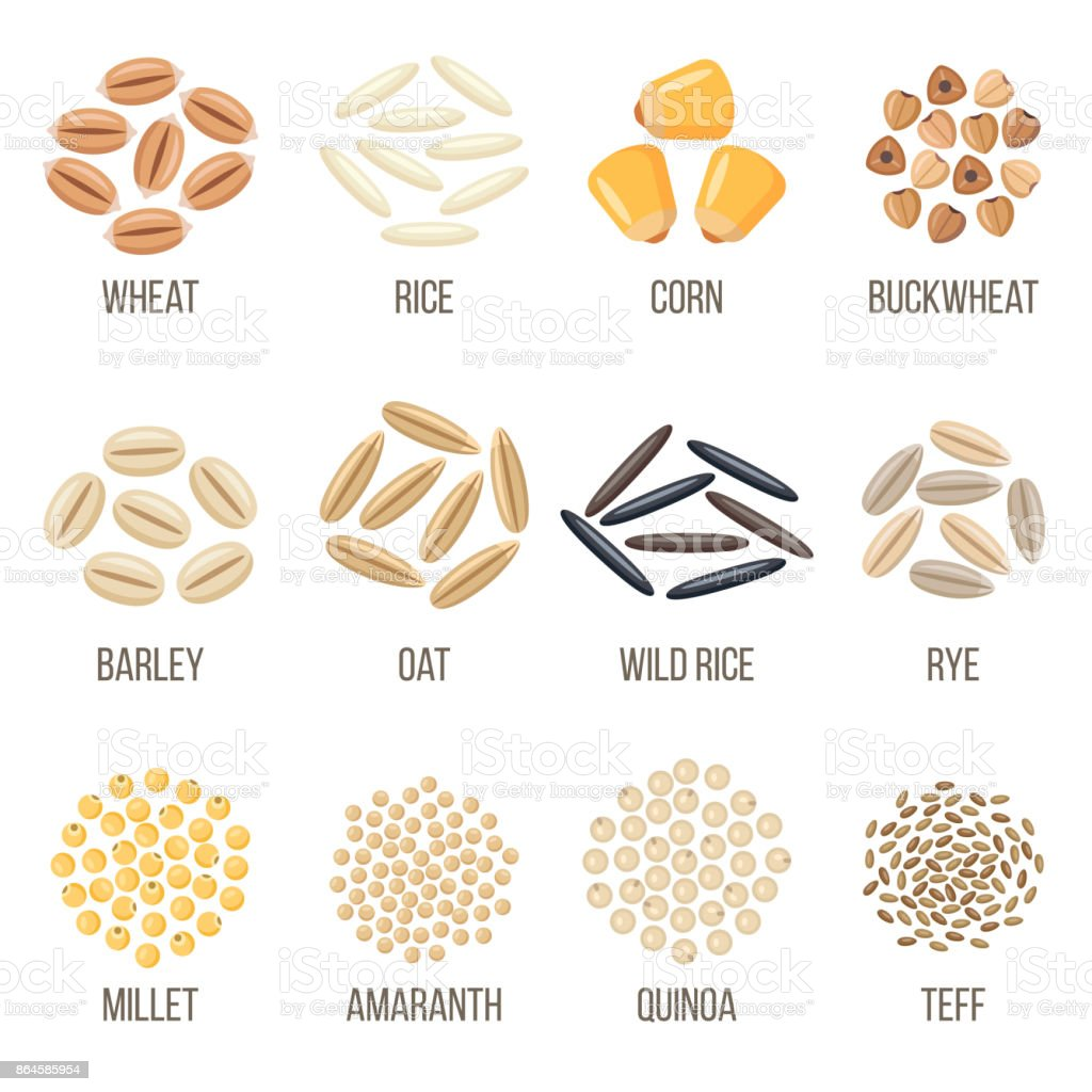 Grains vector art illustration