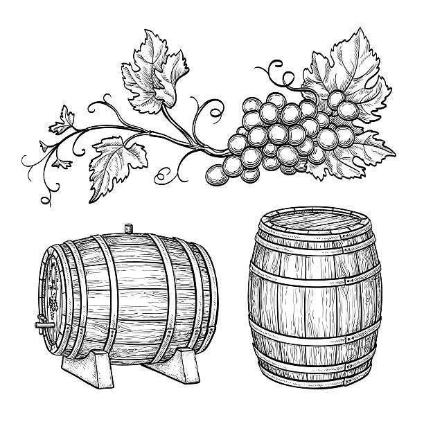 grape branches and wine barrels. - 배럴 stock illustrations