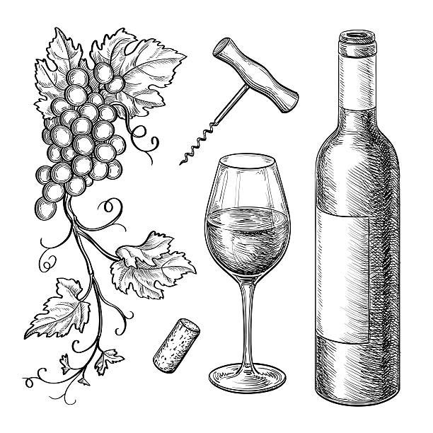 Grape branches, bottle, glass of wine. Grape branches, bottle, glass of wine, corkscrew, cork. Isolated on white background. Hand drawn vector illustration. Retro style. wine stock illustrations