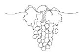 Grapes in continuous line art drawing style. Black line sketch on white background. Vector illustration