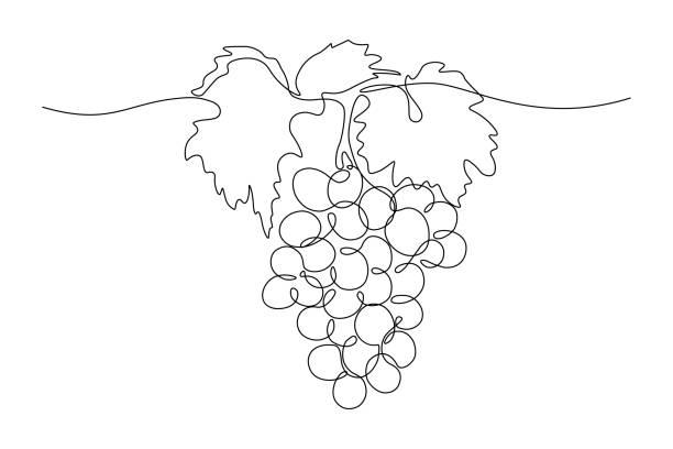 bildbanksillustrationer, clip art samt tecknat material och ikoner med grape gäng - vineyard