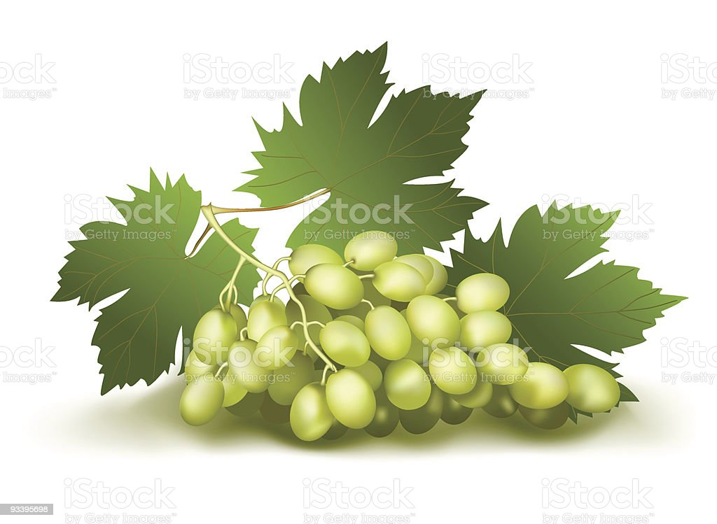 grape cluster royalty-free grape cluster stock vector art & more images of color image