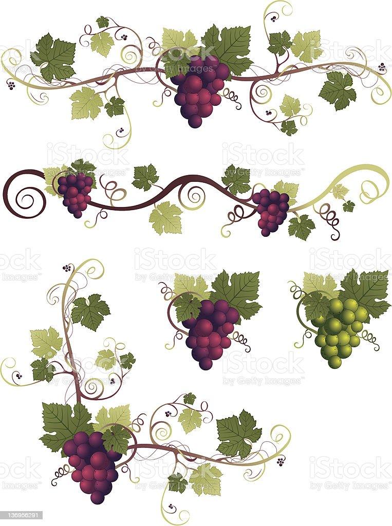Grape Design Elements vector art illustration