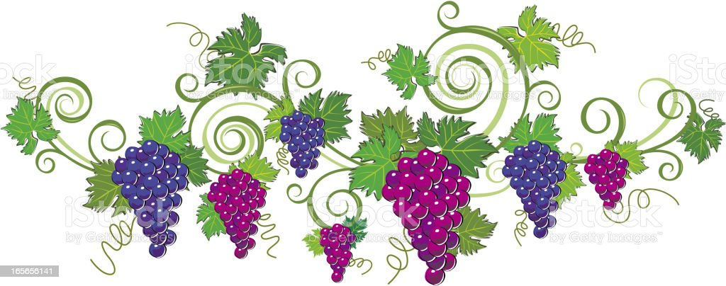 Grape Frame vector art illustration