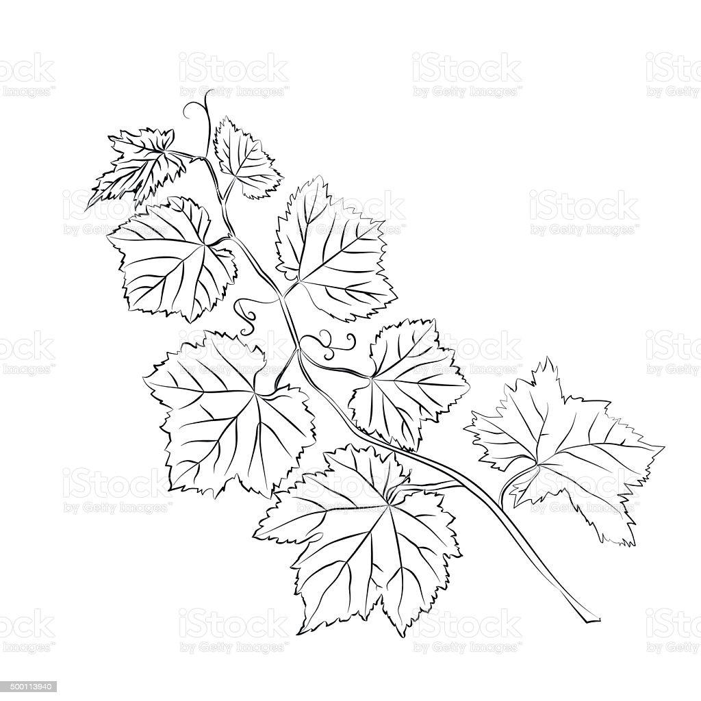 Weinbl tter barock pflanzen vektor illustration 500113940 for Vorlagen malerei
