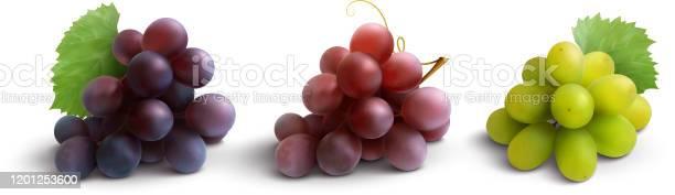 Grape realistic set vector id1201253600?b=1&k=6&m=1201253600&s=612x612&h=ine3bolg2cidgfejrexeetxzhzpv aa7lfheshtijrc=