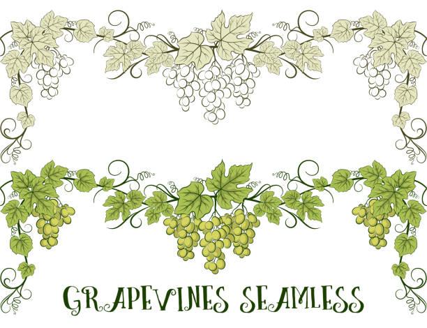 bildbanksillustrationer, clip art samt tecknat material och ikoner med grape, sömlös prydnad - vineyard