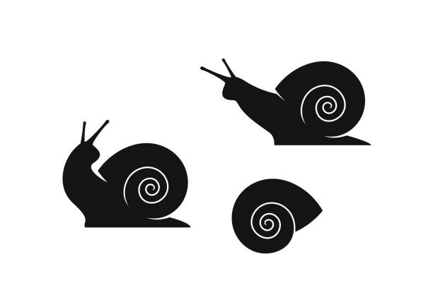 grape snail. isolated snails on white background - snail stock illustrations