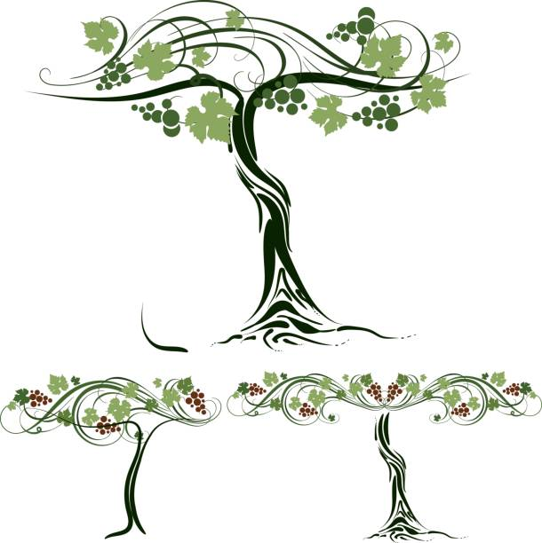 grape - vine stock illustrations, clip art, cartoons, & icons