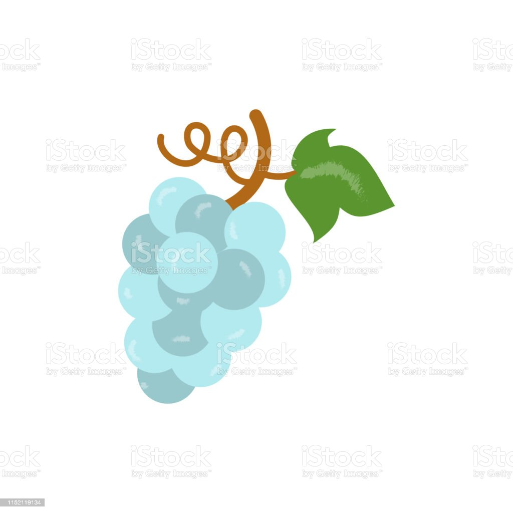 Purple grape vector illustration isolated on white background. Bunch...