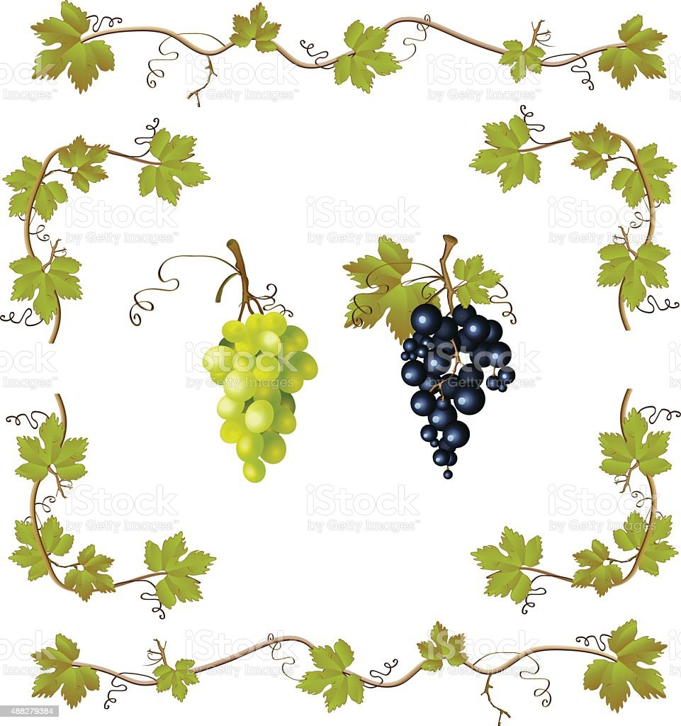 Grape vector set vector art illustration