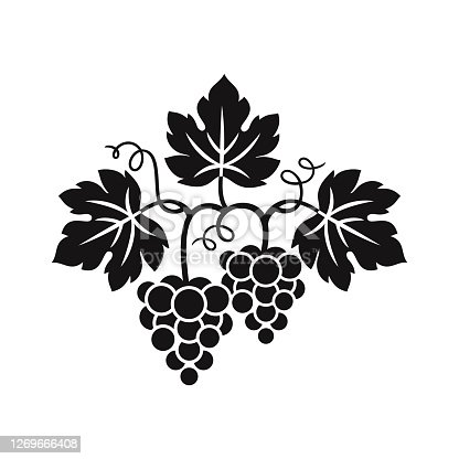 istock Grape vine and bunch grapes. 1269666408