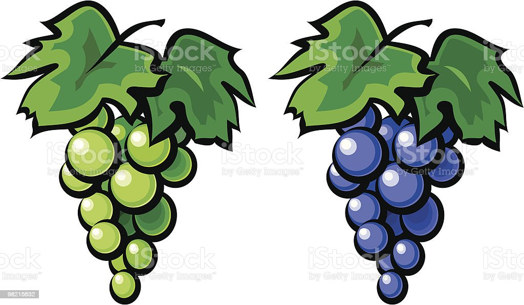 Grape vine illustration vector art illustration