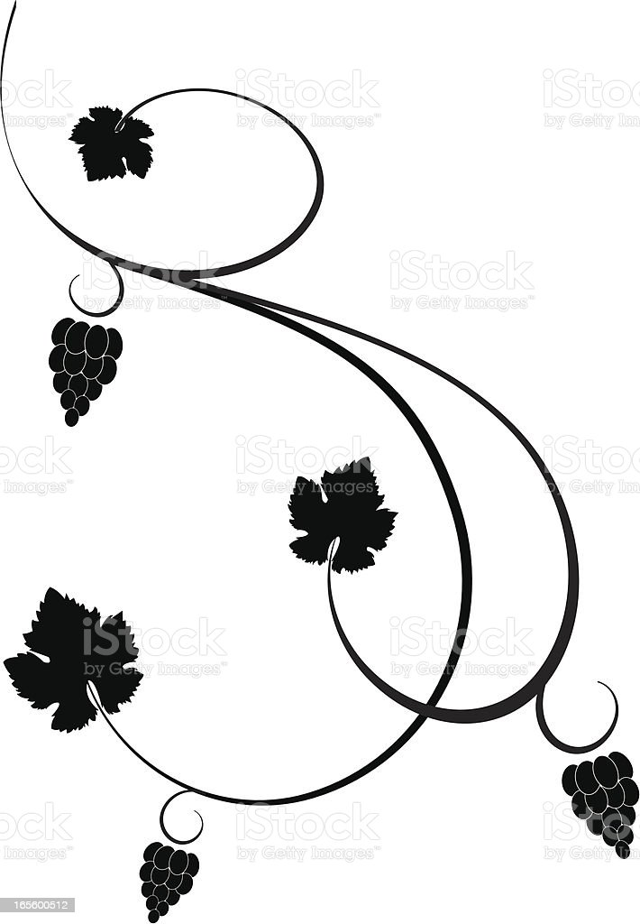 Grape vine vector art illustration
