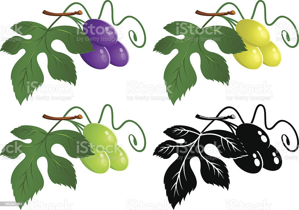Grape vine with grapes vector art illustration