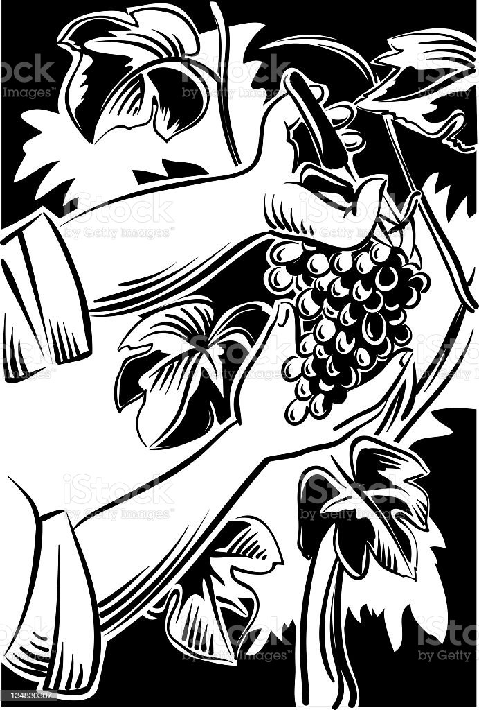 grape-picker vector art illustration