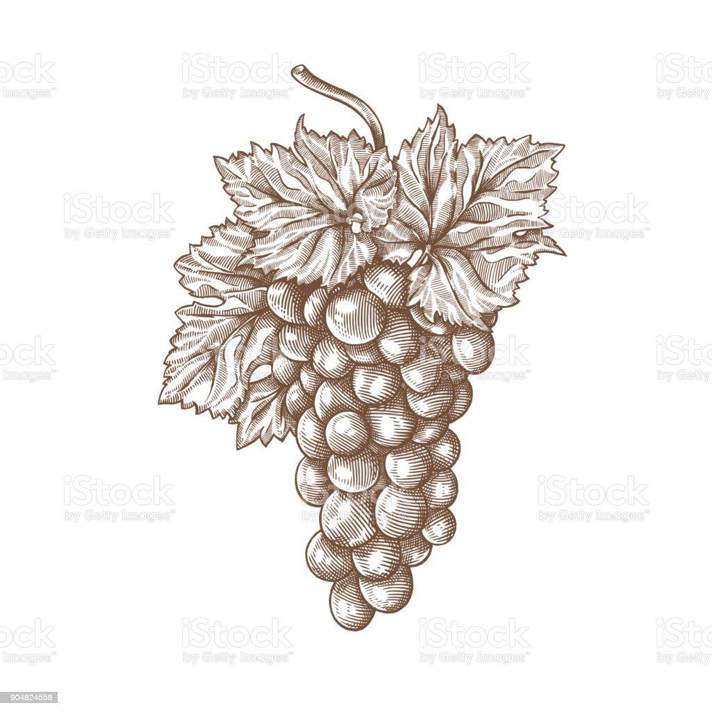 Gravure de raisins gravure de raisins vecteurs libres de droits et plus d'images vectorielles de aliment libre de droits