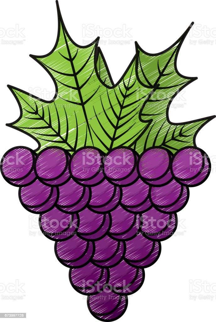 grapes fresh fruit icon royalty-free grapes fresh fruit icon stock vector art & more images of colombia