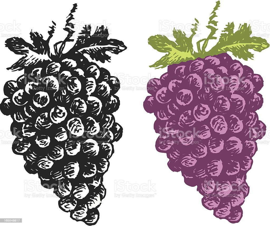 Grapes - Fruit royalty-free grapes fruit stock vector art & more images of food