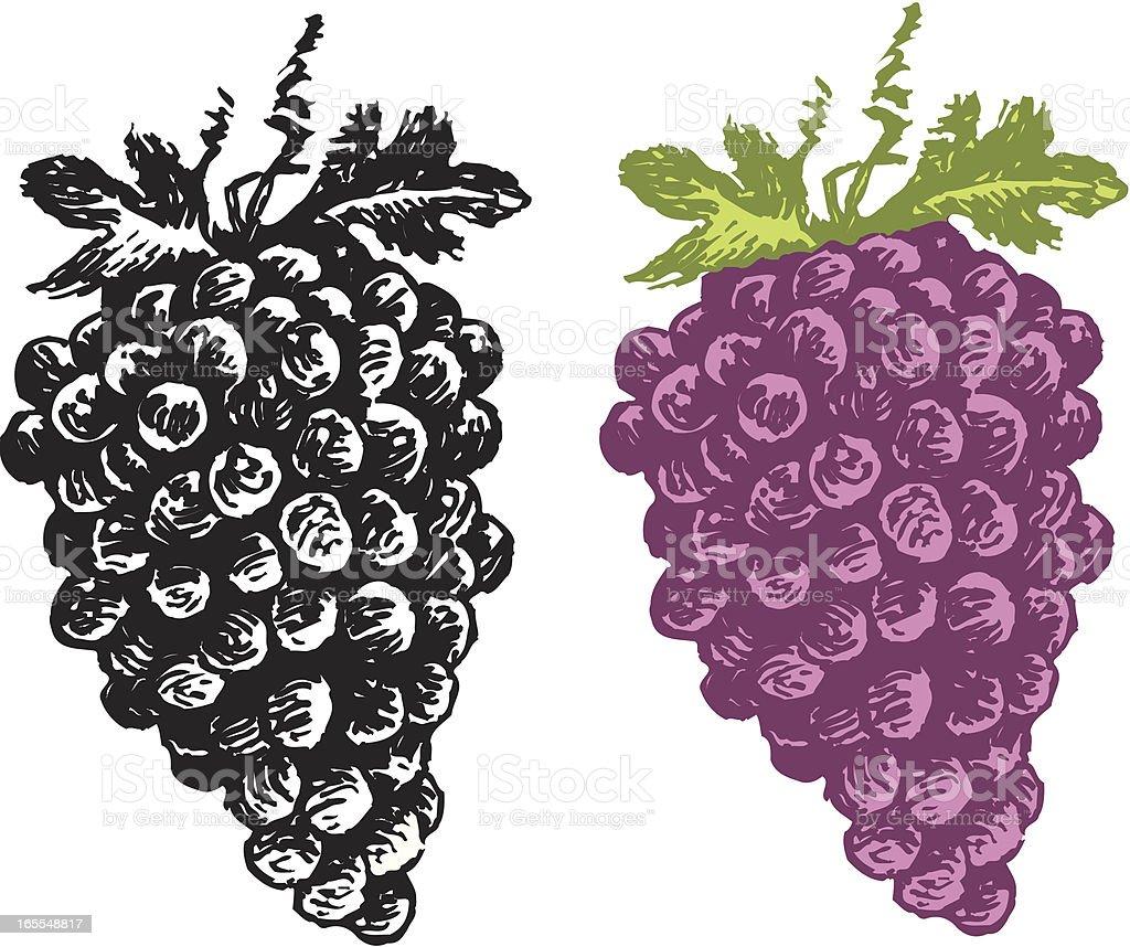 Grapes - Fruit vector art illustration
