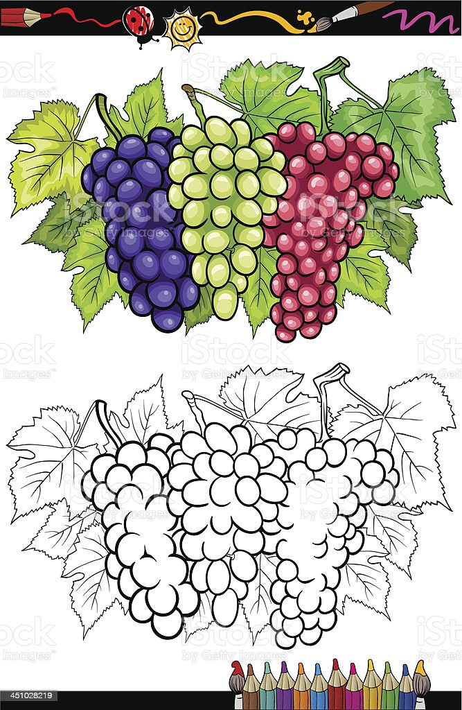 grapes fruits illustration for coloring book royalty-free stock vector art