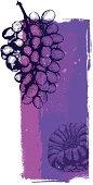 Grapes grunge banner, very high detail - vector illustrtation