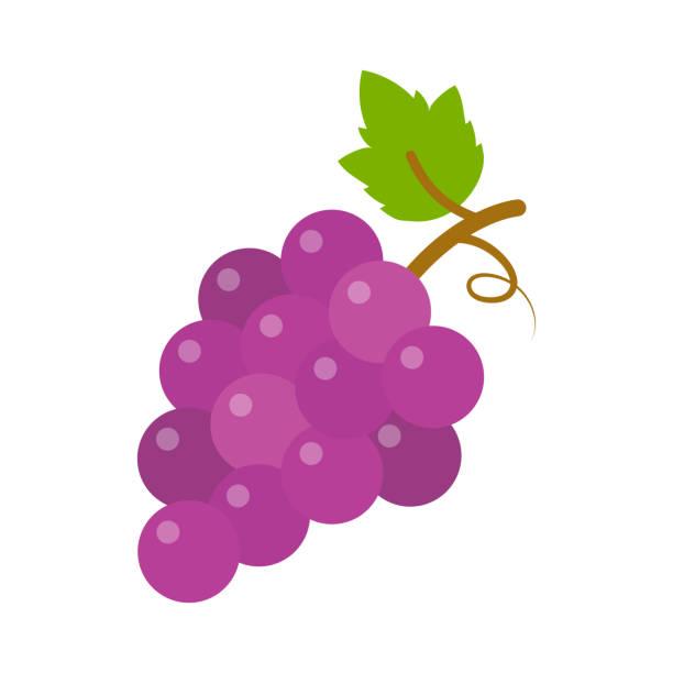 bildbanksillustrationer, clip art samt tecknat material och ikoner med vindruvor ikon, vektor frukt illustration, natur vin - vindruva