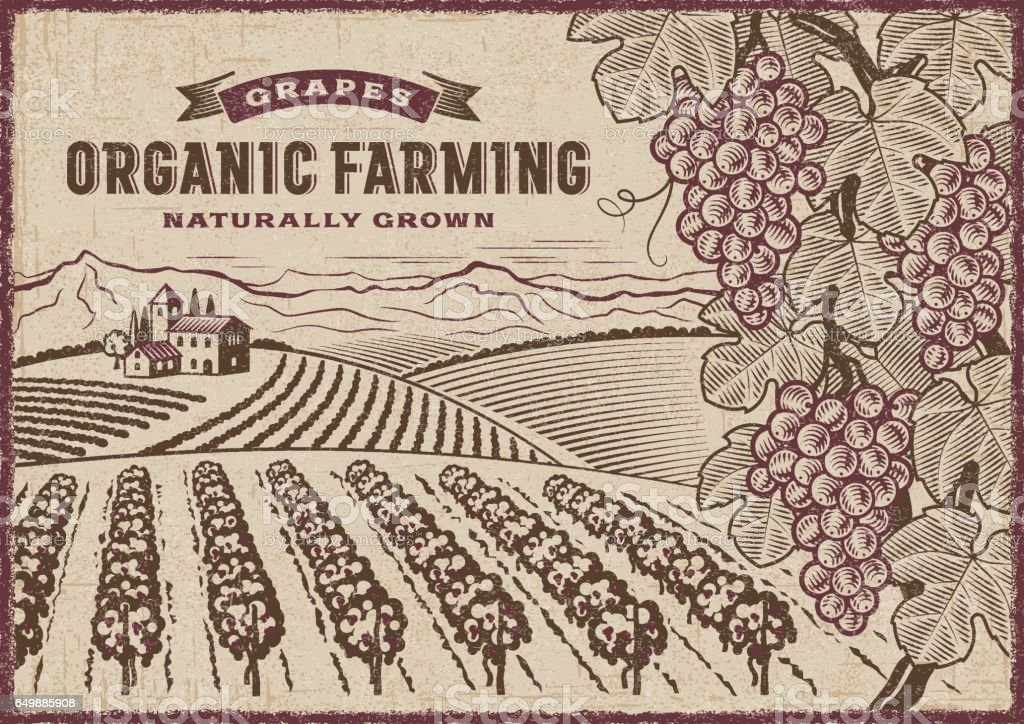 Grapes Organic Farming Landscape vector art illustration