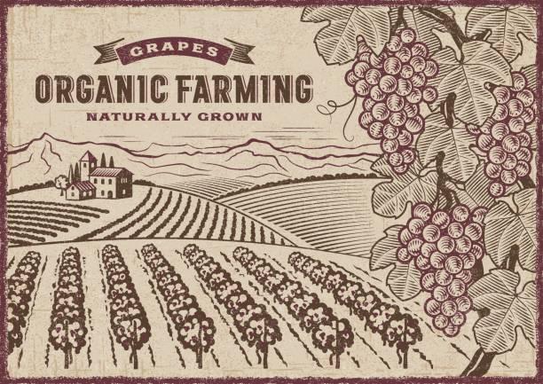 grapes organic farming landscape - toskana stock-grafiken, -clipart, -cartoons und -symbole