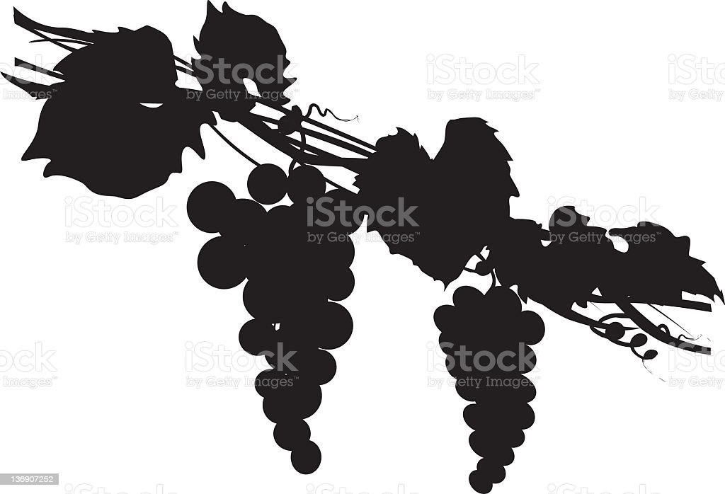 Grapes Silhouette royalty-free stock vector art